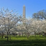 Sunday Someday Washington DC Traveling Well For Less