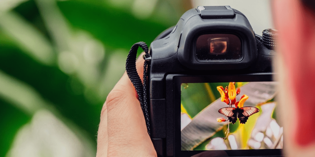 Improve your photo skills with free photography classes. https://www.travelingwellforless.com/go/UltimatePhotographyBundle