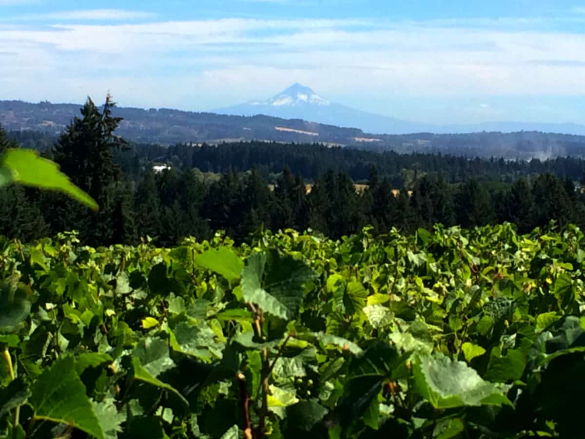 You can enjoy breathtaking views of the Chehalem foothills and Mt. Hood while savoring a glass of wine from Ardiri Winery. | Tualatin Valley wineries | Willamette Wineries | what to do in the Tualatin Valley | TravelingWellForLess.com