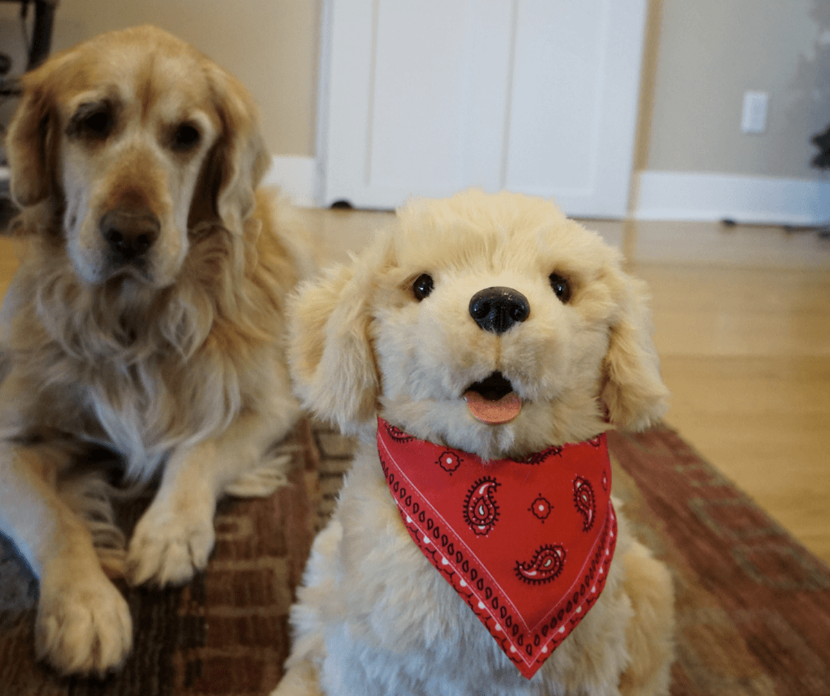 Hasbro Joy For All Companion Pet, Golden Pup is so life-like, even your dog will think its real. https://www.travelingwellforless.com