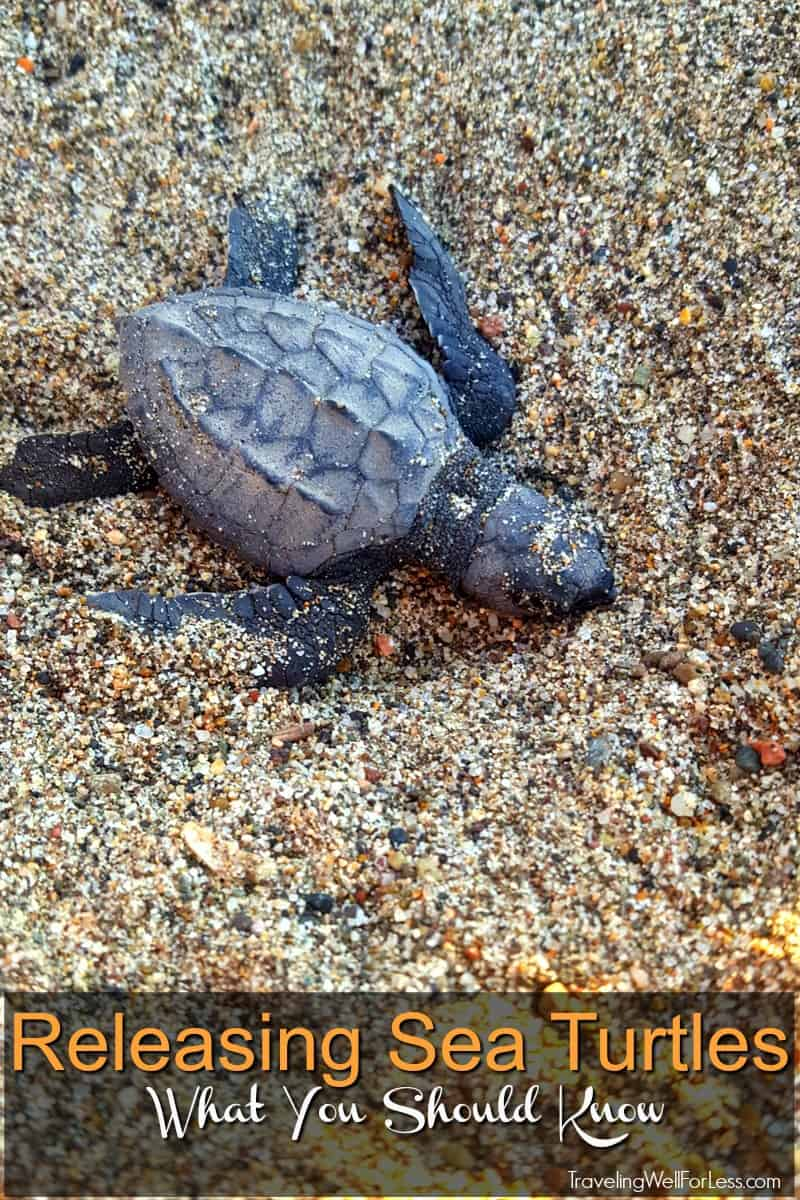 You can release sea turtles on your vacation. Guest at certain hotels in Mexico like the Marriott Puerto Vallarta Resort can release sea turtles during their stay. Here's what you need to know. | release sea turtles | Mexico | https://www.travelingwellforless.com