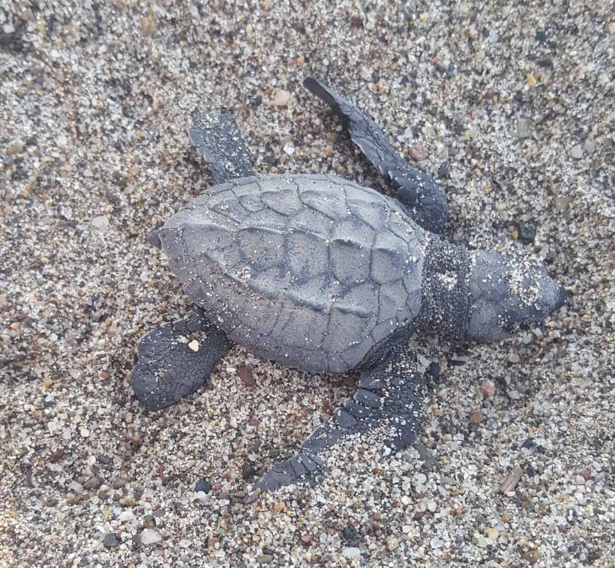 Releasing Sea Turtles: What You Should Know