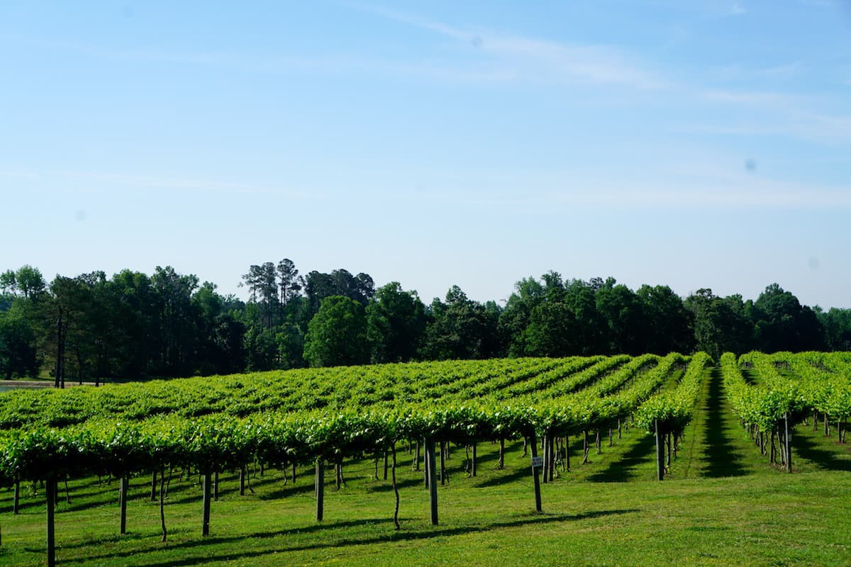 Gregory Vineyards produced their first muscadine wine in 2011. This one stop shop (wedding venue, winery, restaurant, and distillery) has won many awards. | muscadine wine | Beer, wine, and shine trail | Things to do in Johnston County, North Carolina | wine | TravelingWellForLess.com