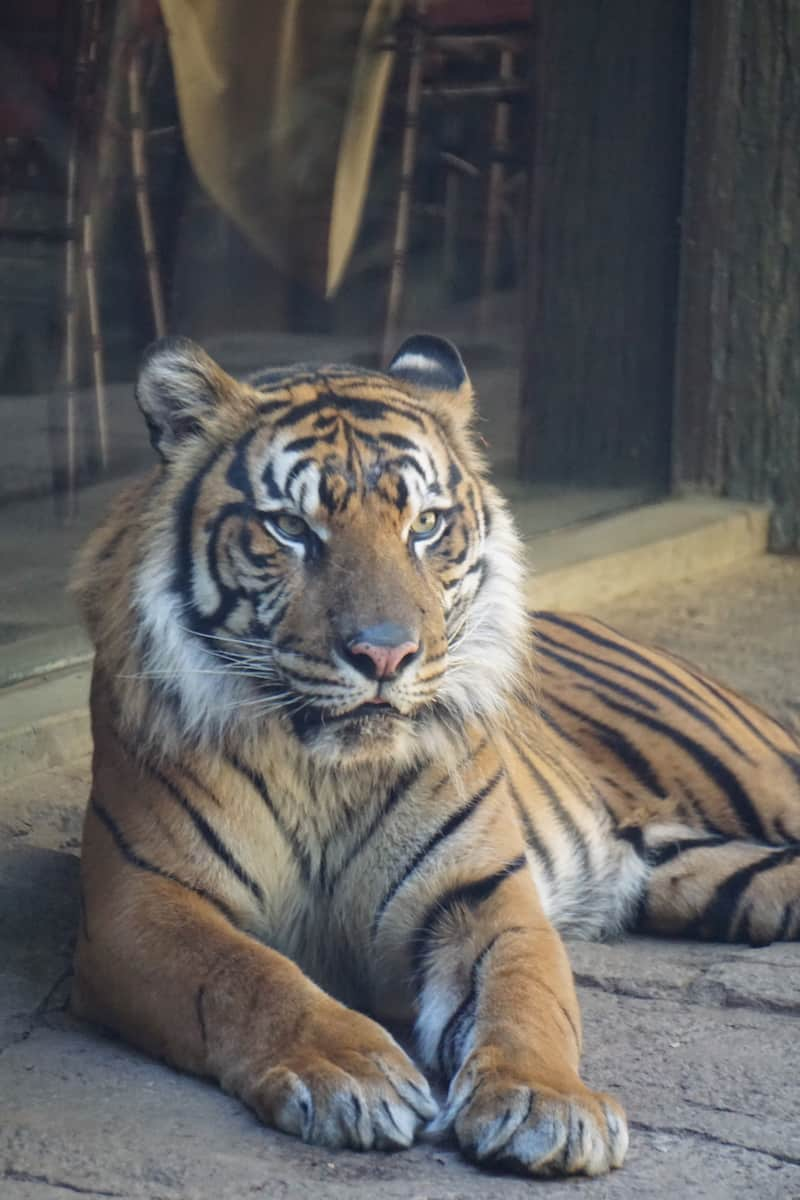 A visit to the San Diego Zoo Safari Park is your chance to go on a safari without leaving the country.