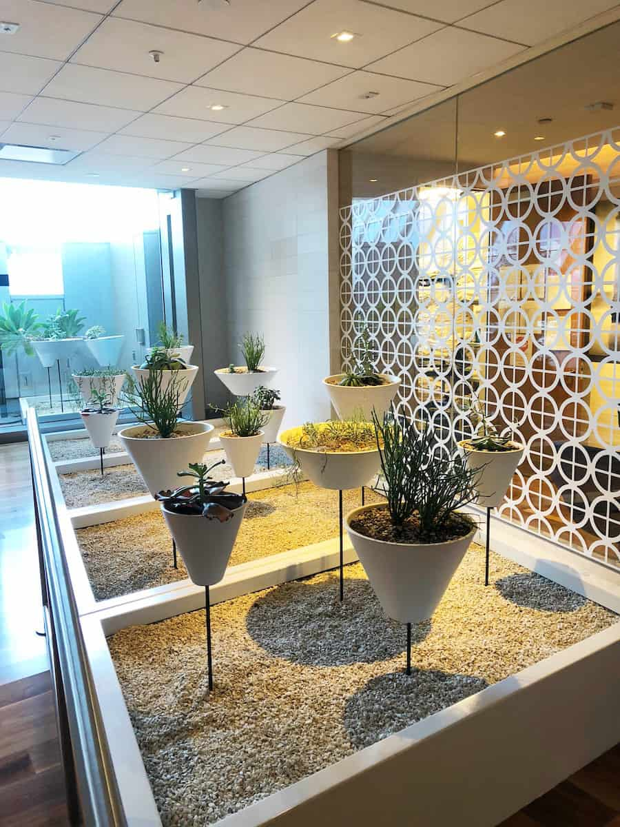 Drought resistance plants in Indoor garden Star Alliance Business Class Lounge LAX
