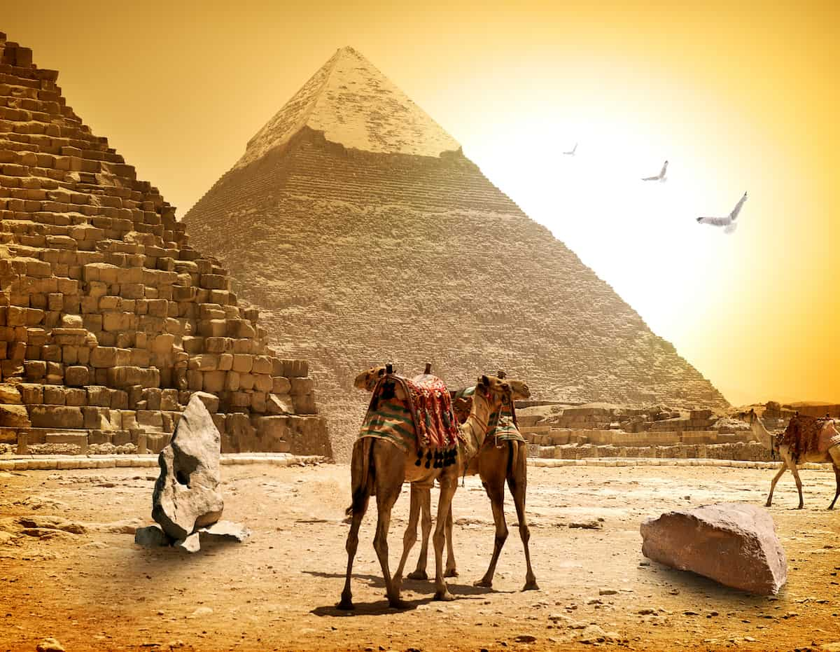 Camels and pyramids at the hot sunny evening in Egypt