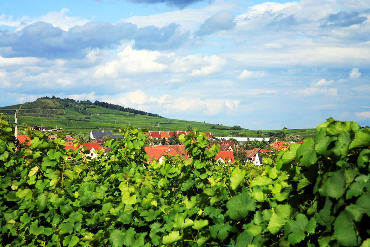 vineyard in Alsace France