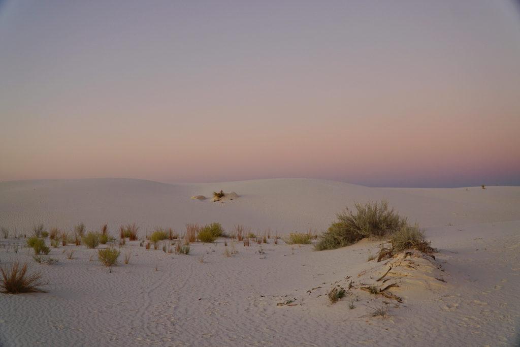 white sand dunes at sunset at White Sands National Park