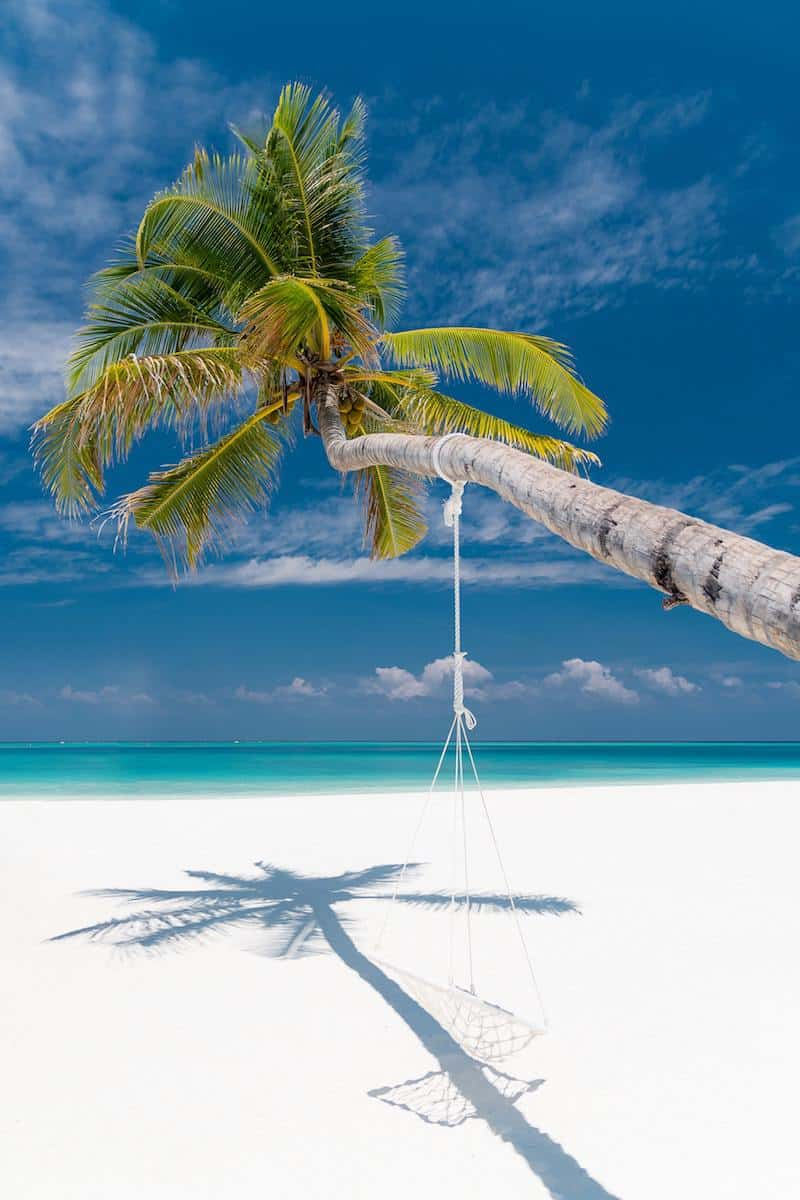 rope swing hanging from palm tree on white sand beach
