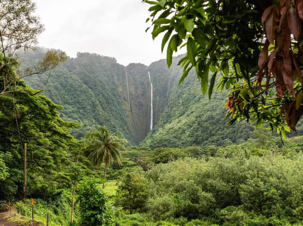 lush green trees and waterfall in waipi'o valley, big island, hawaii