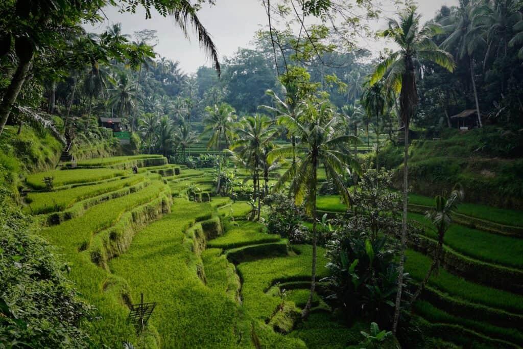 green rice field photo Tegallalang, Gianyar, Bali, Indonesien
