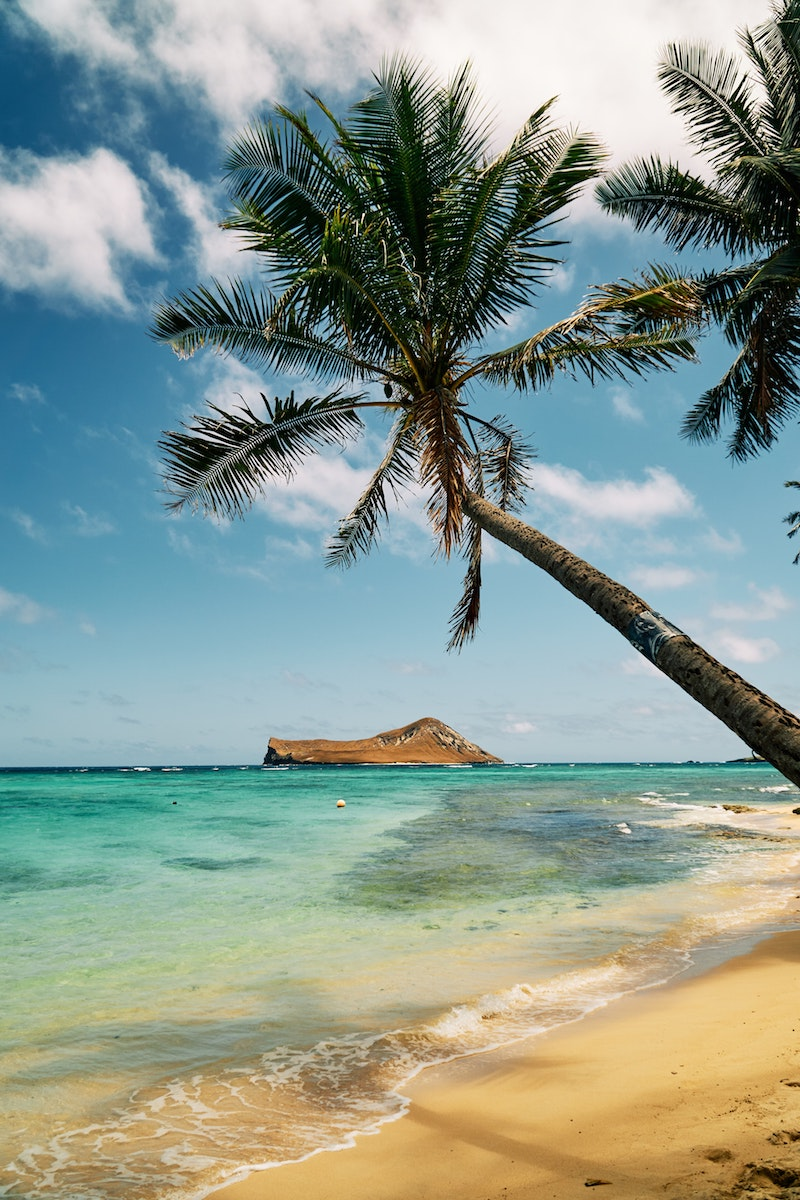 brown and green coconut tree, Iconic Island and Tree shot on the beach in Hawaii