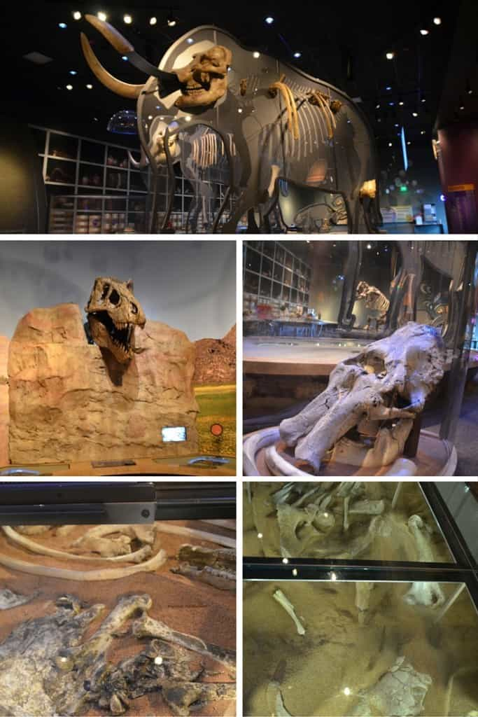 Western Science Center, fossils, mastodon, mammoth, paleontology, museum, Traveling Well For Less